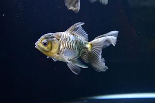 7月9日放送分〜テーマ水槽で珍しい金魚と江の島散歩はいかが!