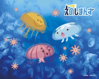 クラゲの9月と