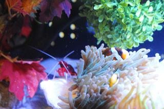 11月8日放送分〜テーマ水槽「クリスマスのはじまり」