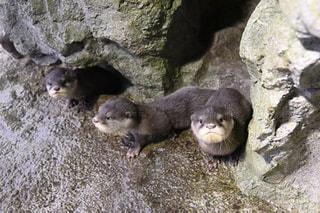 4月25日放送分〜コツメカワウソ三兄弟とペンギンの愛称決定!