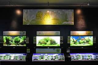 5月9日放送分〜水草眩しいテーマ水槽!「新緑〜みどりの日」