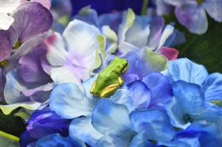 6月4日放送分〜営業再開!雨の季節、カエルにちなんだテーマ水槽について。