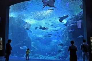 6月11日放送分〜深海生物標本コーナーがさらにパワーアップ!