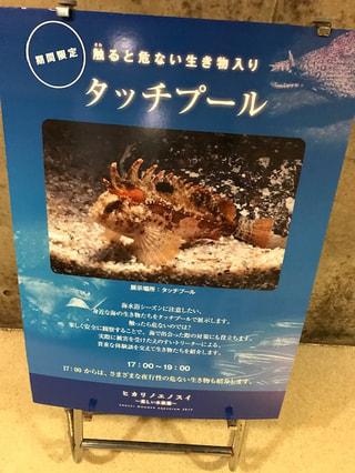 8月8日放送分〜海で出会うとちょっと危険な魚たち!