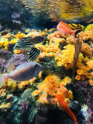 2月27日放送分〜3月5日は語呂合わせで珊瑚の日!