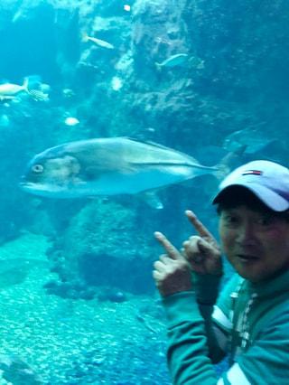11月22日放送分〜釣り人に大人気のロウニンアジが相模湾大水槽に登場!
