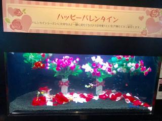 1月31日オンエア〜恋してえのすい♡