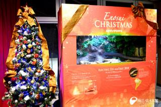12月6日放送〜デンキウナギのecoツリーでクリスマス気分を!