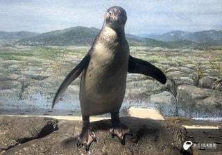 1月23日放送分〜フンボルトペンギンの雛、今日から愛称募集スタート!