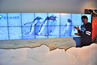 ペンギンの新しい仲間 (11月23日放送)