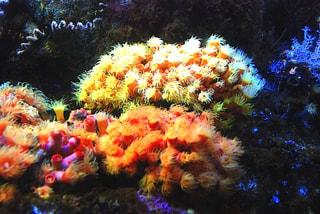 美しい逗子沖のサンゴ (11月20日放送)