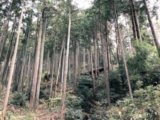 「冒険」 in フォレストアドベンチャー・小田原