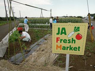 いよいよ収穫Fresh Market畑(10月22日放送)