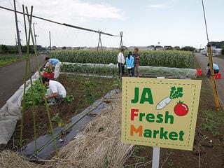 相模原で収穫祭(7月9日放送)
