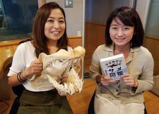 【サメ】沼口麻子さん