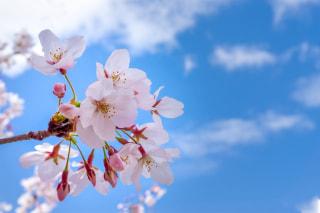 Shanti Time「春はなぜ眠くなるのか」