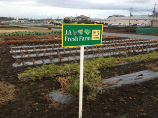 JA Fresh Farm 日誌 (12/27)