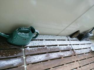 日本茶クイズ/緑茶は、入浴剤としても使える⁉…(11月26日)