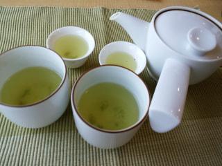 """日本茶クイズ!""""北海道でも、お茶を育てている⁈"""""""