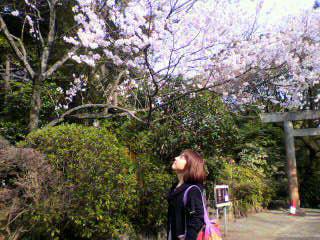 まもなく、桜の季節本番です!