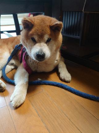 【ハマポチ】シニア犬と生活する注意点