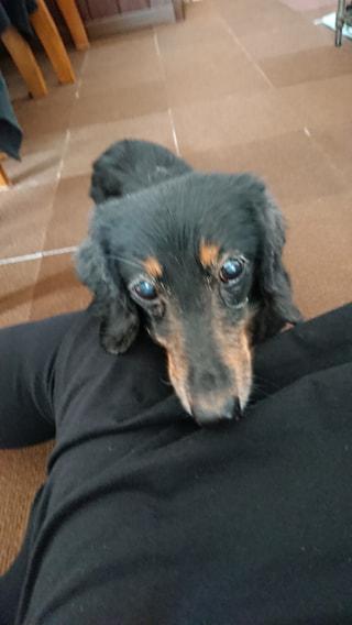 【ハマポチ】シニア犬の療法食