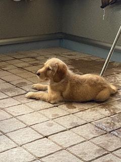【ハマポチ】子犬のうちにやっておくべき事