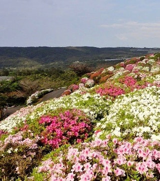 春爛漫の沖縄!