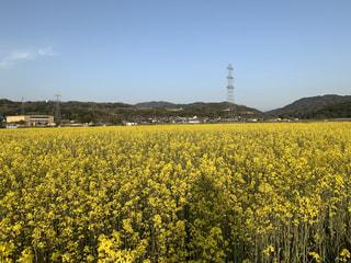 日本最初の元号「大化」の頃から米を作っているらしい。「エフヨコ田んぼの近江たなかみ米」
