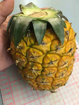 その甘さ、まるで和三盆糖のよう・・石垣島の匠が作る、国産パイナップル