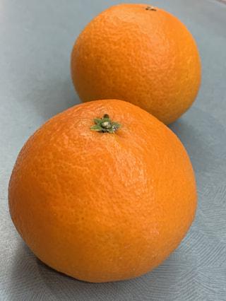 スター品種!ぷるんぷるんの愛され柑橘・紅まどんな、今年も登場