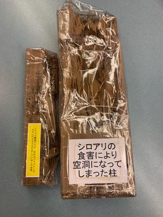 シロアリ駆除サービス!割引キャンペーン今シーズン最後の紹介!