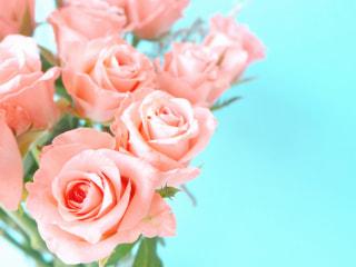 NITTEN ハナラボ 第28回 「美と健康にまつわる植物」