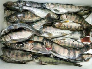 旬のお魚クイズ「渓流釣り」④