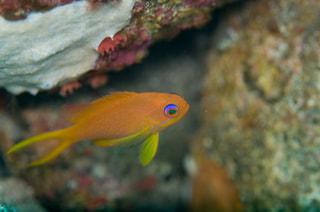 マンゴー隊「大瀬崎の水中写真」