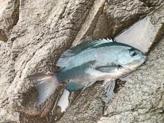 初心者にオススメの釣り「海釣り公園」③