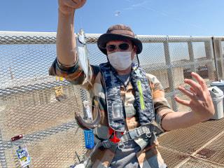 爆釣モーニング「サビキ・ちょい投げ釣り実釣レポート」